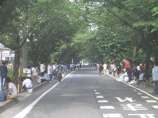 本校正門前桜並木付近